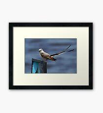 Scissor-tailed Flycatcher 1 Framed Print