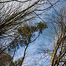 Sun-kissed Branches by Jaeda DeWalt