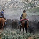 Ace 'n Shorty Drivin' Herd by pmreed