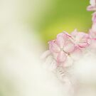 Touched by Pink by Tracy Friesen