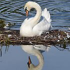 Reflection by Dorothy Thomson