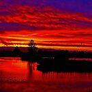 Sunset at Golden Garden Ponds  by Chuck Gardner