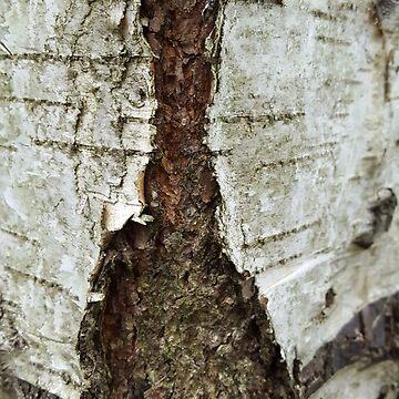Tree bark V. 1 by Sheepandwolf