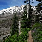 Ape Canyon Trail - Mt St Helens by Randy Craig (nature & landscape photography)
