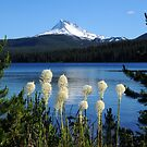 Mt Jefferson, Olallie Lake and beargrass by Randy Craig (nature & landscape photography)
