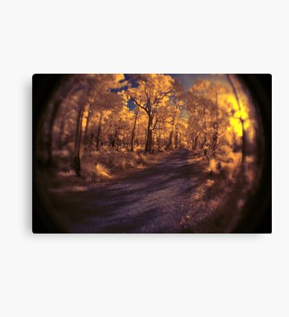 'Bent Forest', ISO1600 IR Canvas Print