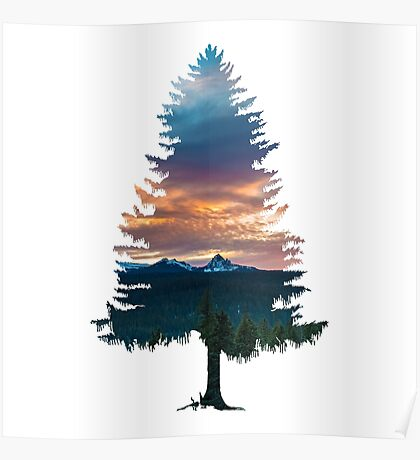 Spruce Tree Poster