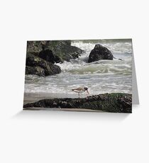 Oyster catcher Low Tide Greeting Card