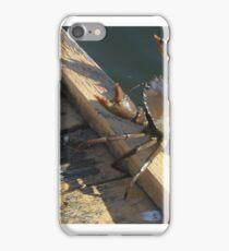 Mud Crab Queensland Australia iPhone Case/Skin