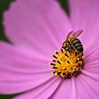 Bee Hind by Karen Tregoning