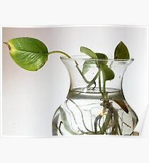 Plant and Roots Poster
