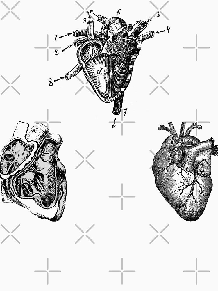Vintage Heart Anatomy by StilleSkygger