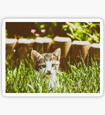 Baby Cat Playing In Grass Sticker