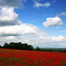 Gloucestershire in June by vivsworld