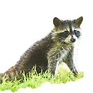 Baby Raccoon by Bonnie T.  Barry