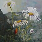 Daisies by Lisa Gibson