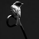 Eastern Phoebe in Black and White by Jim C. Hines