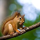 Squirrel! by Jim C. Hines
