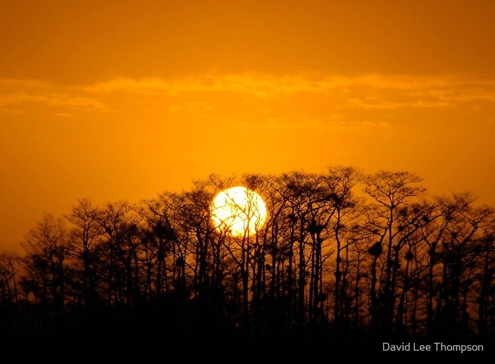 """Everglades Sunrise"" by David Lee Thompson"
