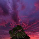Warrandyte Sunset IX by Adam Le Good