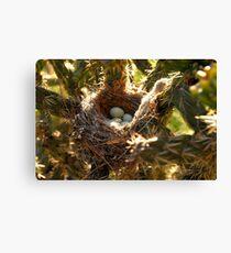 """Thorny Nest"" Canvas Print"