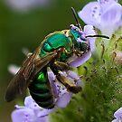 Green bee on flower by Joe Saladino