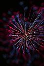 fireworks 15/7/16 by david gilliver