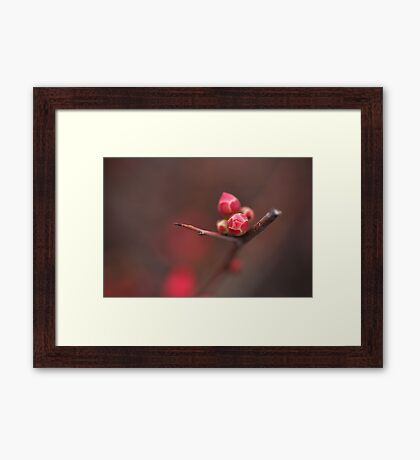 Flowering Quince in Bud Framed Print