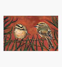 Golden Crowned  Sparrow Photographic Print