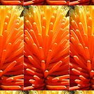 Hot Poker Up Close by KazM