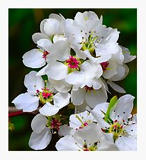 Blossoms Photographic Print