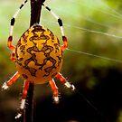 Yellow Orb Spider by Joe Saladino