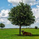 Cow in shade by Joe Saladino