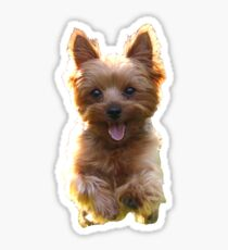 Mr. Pickles Dog Puppy Yorkie Sticker