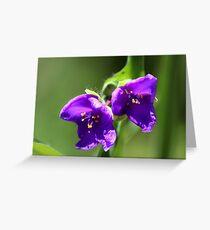 Virginia Spiderwort - Tradescantia virginiana Greeting Card