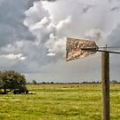Wind Vane by Joe Saladino