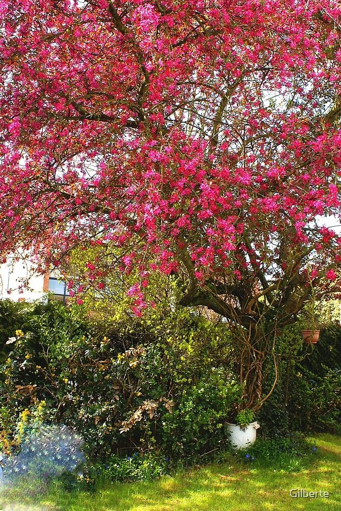 Ornamental Appeltree in my garden by Gilberte