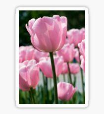 Pink Tulip Sticker
