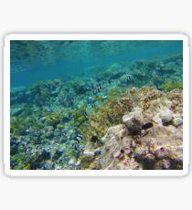 The Red Sea Sticker