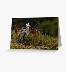 Relaxing Great Blue Heron Greeting Card