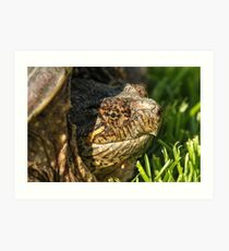 Big Snapping Turtle Art Print