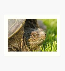 Big Snapping Turtle 2 Art Print