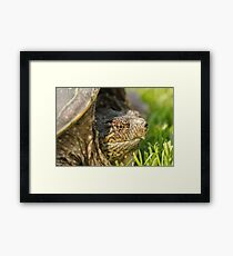 Big Snapping Turtle 2 Framed Print