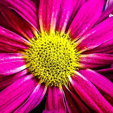 Pink with Yellow Center  by sherfin