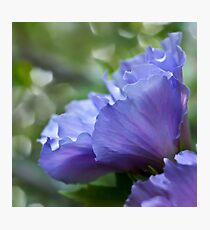 Ethereal blue - rose of sharon Photographic Print
