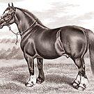 Horse by Kawka