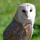 Barn Owl by Declan Carr