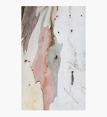 TREE, BARK, TEXTURE, color, Eco, Ecology, Nature, Natural World Photographic Print