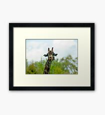 Quirky giraffe looking at you Framed Print