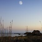 The moon and the helychrisum by Alessandra Antonini